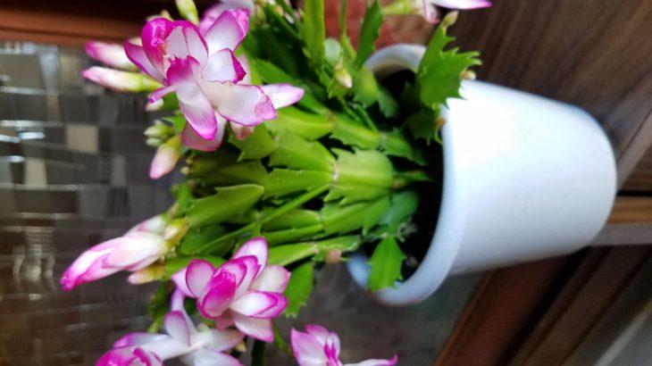 花に蝶🌹🦋 女性がさらに内側から輝く秘訣❤️って⁉