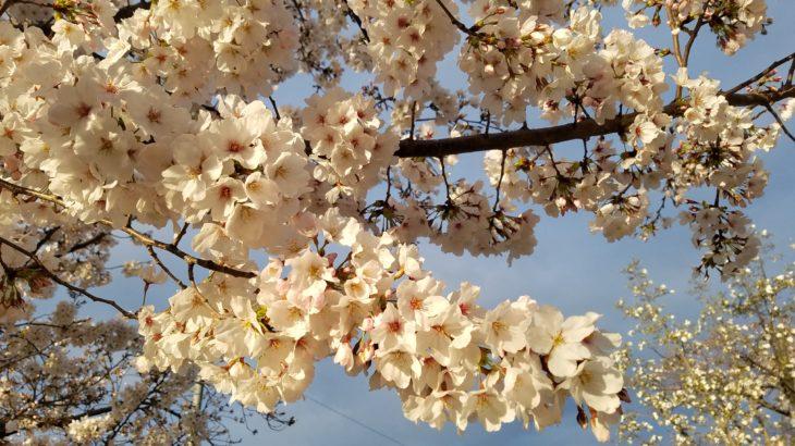 京都体験会❤️ 女性性のアップには◯◯◯◯が大切❣️